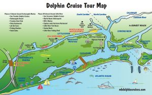dolphin-cruise